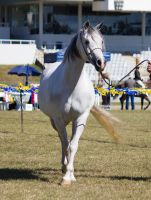STOCK - Gold Coast show 146 by fillyrox
