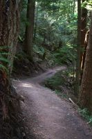 Path in through the Forest by GreenEyezz-stock