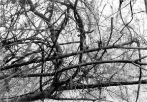 Branches by Tabris117