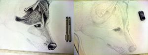 College - Wolf Crosshatch WiP by Omegaro