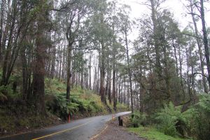 Forrest Road Stock 1 by CNStock