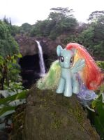 Rainbow Dash at Rainbow Falls by BurningMyElectronics