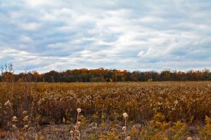 Fall Fields by MoonShadowPhoto