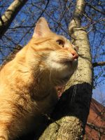 Orange cat from below by CotyStock