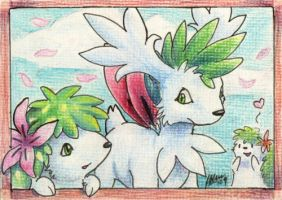 Shaymin and shaymin and... by nepryne