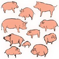 Pink Piggies by Ironmary
