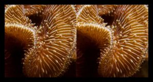 Stone Coral 01 by Hector42