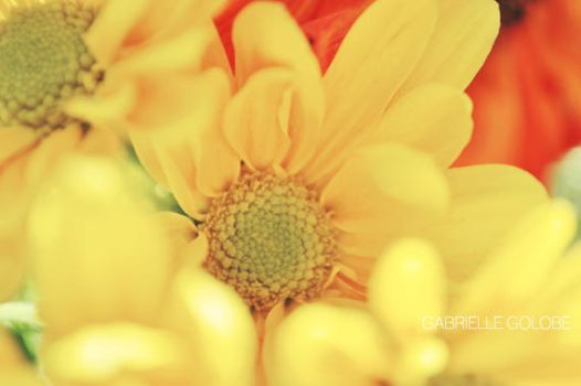 In the Yellow by MsGabrielle