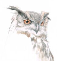 Eagle Owl by drawntoatee
