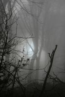 In the fog by stratael