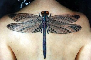 dragonfly by GlassBeetle