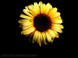 Pretty Flower by SamtasticPhotography