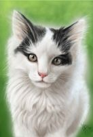 the neighbor's cat by nocturnalMoTH