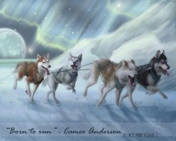 Snow Dog Run by cameoanderson