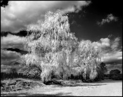 Springtime II infrared... by MichiLauke