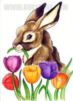 Hare in the Tulips by auryanne