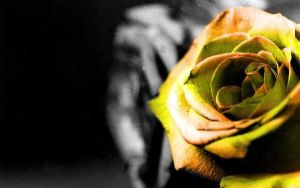 Yellow Rose by thetwihardfan