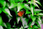 Butterfly Pararge Aegeria by 17Fox