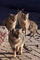 Wild Cats by garion87