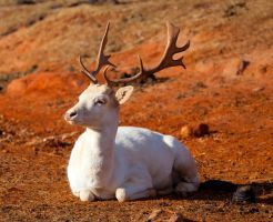 White Deer lll by deseonocturno
