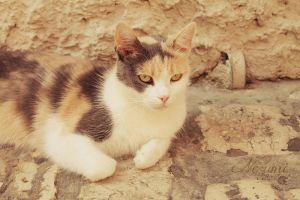 Stray Cat 1 by nezumi-photography