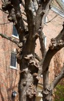 Knotty Tree 01 by MaxHedrm0