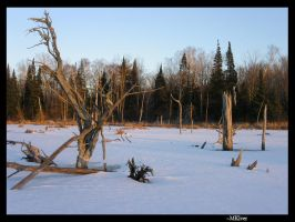Frozen Tree Pond by MKlver