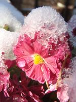 First Snow by Mihaela7