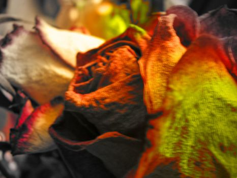Psychedelic  Roses by onegoogle