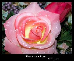 Drops on a Rose I by Rae-Lynn
