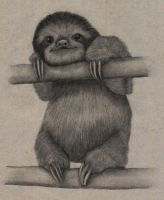 Sloth by Slow-Bullet