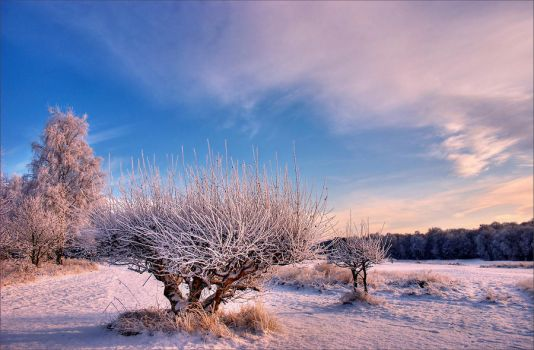 Frost by scotto
