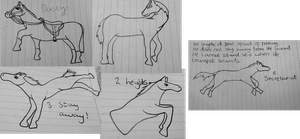 Horse Sketches! [Batch two] by DarkParadise24