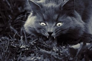 Horror cat by Winstein