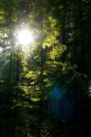Forest light by Valdkynd