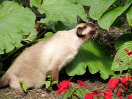 This Hosta Plant Smells Nice by Kitteh-Pawz