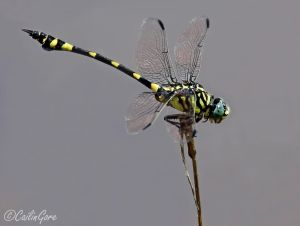 Dragonfly Sentry by ~CailinGore