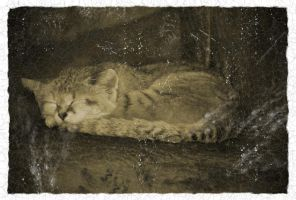 Sand Cat Grunge by Norble