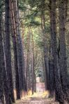 Walk in the woods by carlahoon