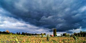 Storm of the Pumpkins by IndigoRavenImagery