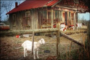 The Goat House by existentialdefiance