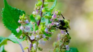 Busy Bee Close 9-13-370 by MariaWillhelm
