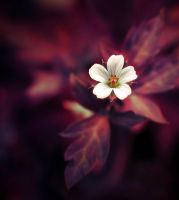 Flower by lm4242