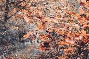 Fall 2013 by Wuddie06
