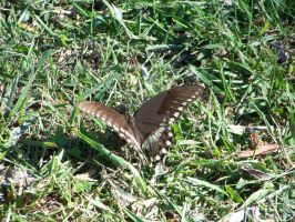 Butterfly in the grass by SCT-GRAPHICS