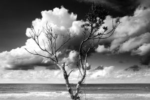 A tree, standing at the beach2 by AntonioAndrosiglio