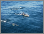 Here come dolphins by Mogrianne