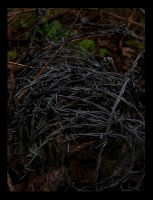 Barbed Wire by berttheturt