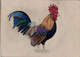 Rooster by ankara97b