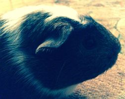 Hera, My Guinea Pig by ArtIsMyFate